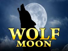 wolf noon